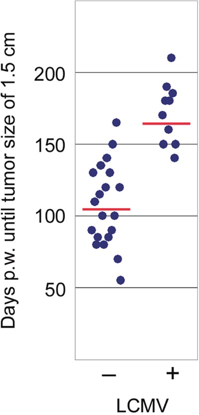 Comparison of tumor development in NP8 mice infected at day 60 pw [right dots, n = 10; means = 172 days, with a 95% confidence that the population mean (μ) falls between 156 and 187 days] with that of uninfected NP8 mice [left dots, n = 20; means = 107 days, with a 95% confidence that μ falls between 94 and 120 days]; y-axis shows time until tumors had grown to a size of 1.5 cm in diameter; p-valueinfection vs control < 0.00001 significance at p < 0.01.
