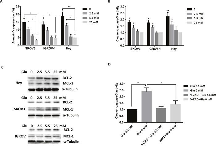 Depletion of glucose induces apoptosis in ovarian cancer cells.