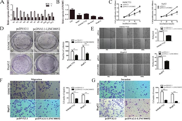 LINC00052 was downregulated in HCC and overexpression of LINC00052 inhibited HCC cell proliferation, migration and invasion in vitro.