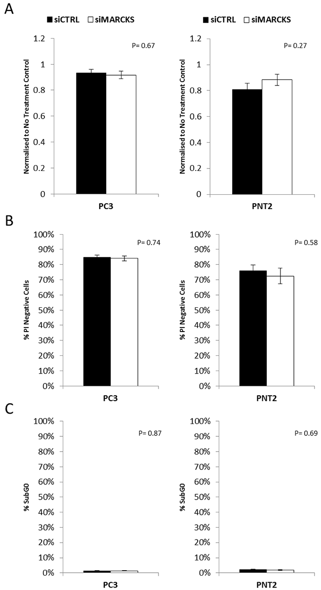 MARCKS does not play a role in prostate cancer cell viability.