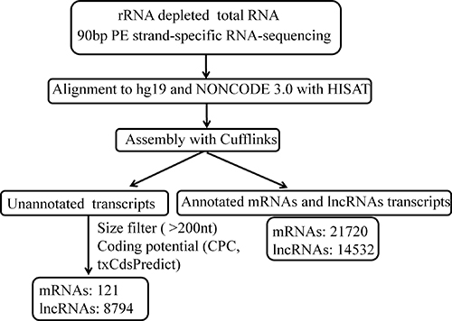 The pipeline for systematic identification of lncRNAs and mRNAs in HBV-related HCC.