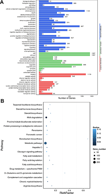 GO and KEGG pathway analysis of differentially expressed mRNAs between HBV (+) HCC and HBV (–) HCC tissue samples.
