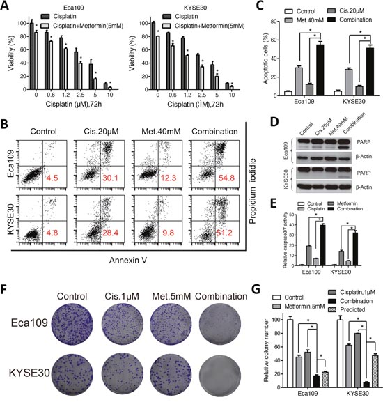 Metformin enhanced sensitivity of Eca109 and KYSE30 cellsto cisplatin.