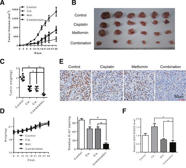 Combination of metformin and cisplatin inhibited ESCC tumor growth in vivo.