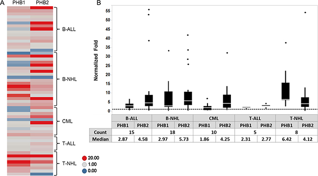 PHB1/PHB2 are overexpressed in tumor cells obtained from individuals diagnosed with lymphoid or myeloid malignancies.