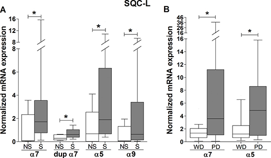 Association of smoking and tumor differentiation grade with the expression levels of nAChR subunit mRNAs in lung tumor biopsies from SQC-L patients.