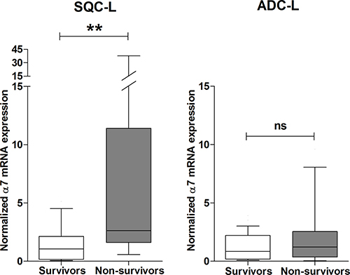 High expression level of α7 mRNA negatively influences survival of patients with SQC-L but not those with ADC-L.