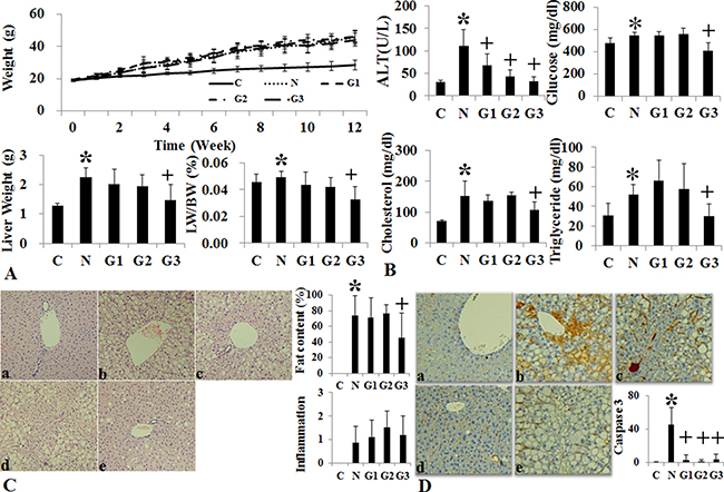 Changes of body weight, liver histology and biochemistry following conventional G-CSF treatment in high fat induced fatty liver model.