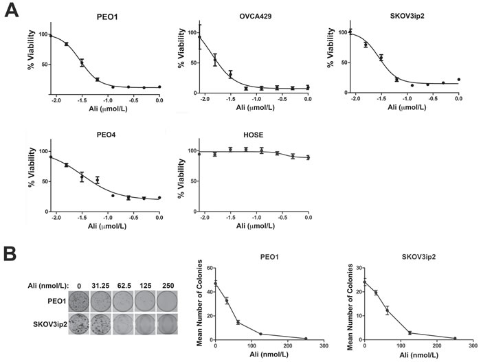 Inhibition of AURKA activity diminishes the growth and clonogenic survival of ovarian carcinoma cells.