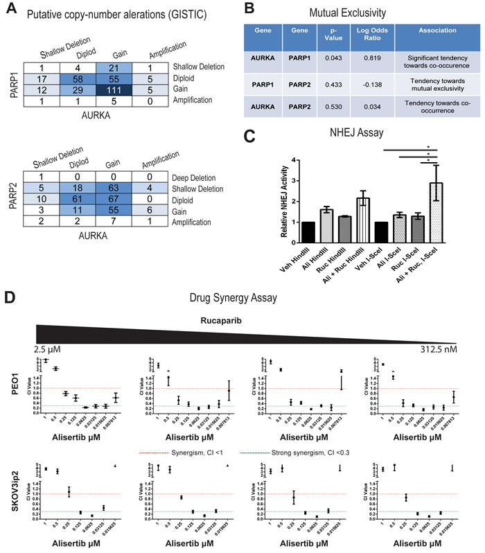 Drug synergy between alisertib and rucaparib in both PARPi sensitive and resistant cell lines.