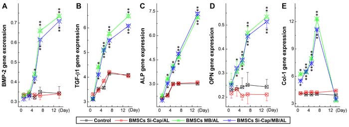Expression profiles of growth factors (BMP2 and TGF-b) and related genes (ALP, OPN, and Col-I) using real-time RT-PCR.