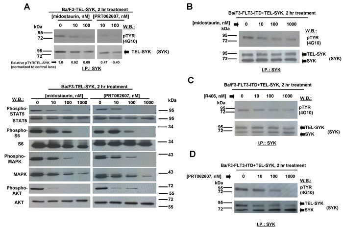 Effects of midostaurin, R406, and PRT062607 on phosphorylation of constitutively activated TEL-SYK and downstream signaling molecules.