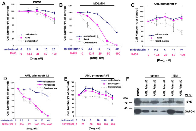 Potentiation of effects of midostaurin against drug-resistant AML primagraft cells by R406 and PRT062607.