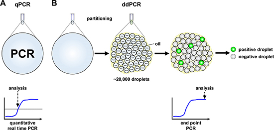 Schematic models of quantitative real-time and droplet digital PCR.