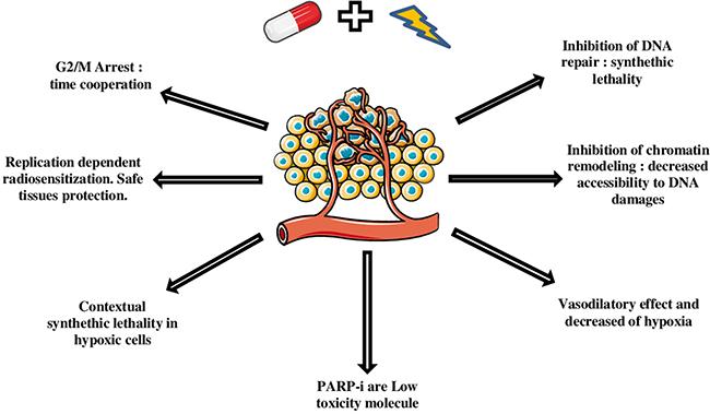 Mechanisms and advantages of PARPi radiosensitization.