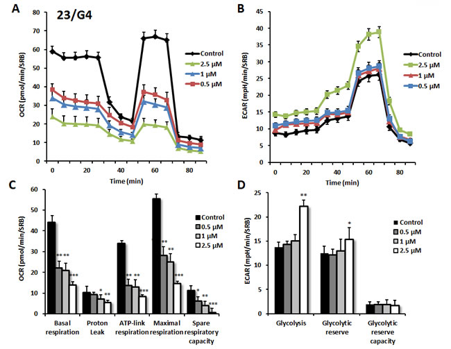 Effects of compound 23/G4 on the metabolic activity of MCF7 human breast cancer cells.