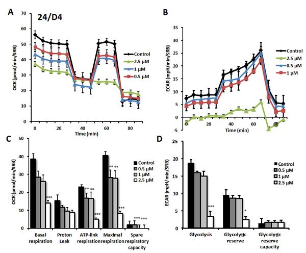 Effects of compound 24/D4 on metabolic activity of MCF7 human breast cancer cells.