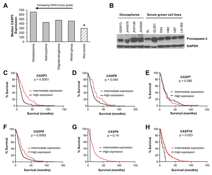 Procaspase-3 is expressed in brain tumors and its expression is a prognostic factor for survival of glioblastoma patients.