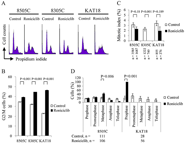 Roniciclib accumulates cells in G2/M phase and inhibits mitotic progression.
