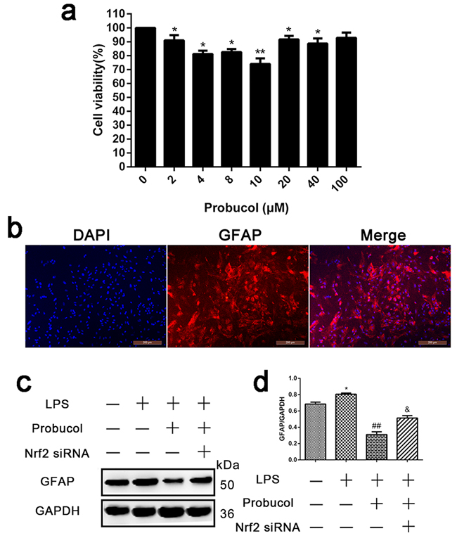 Probucol inhibits LPS-induced astrocytes activation.