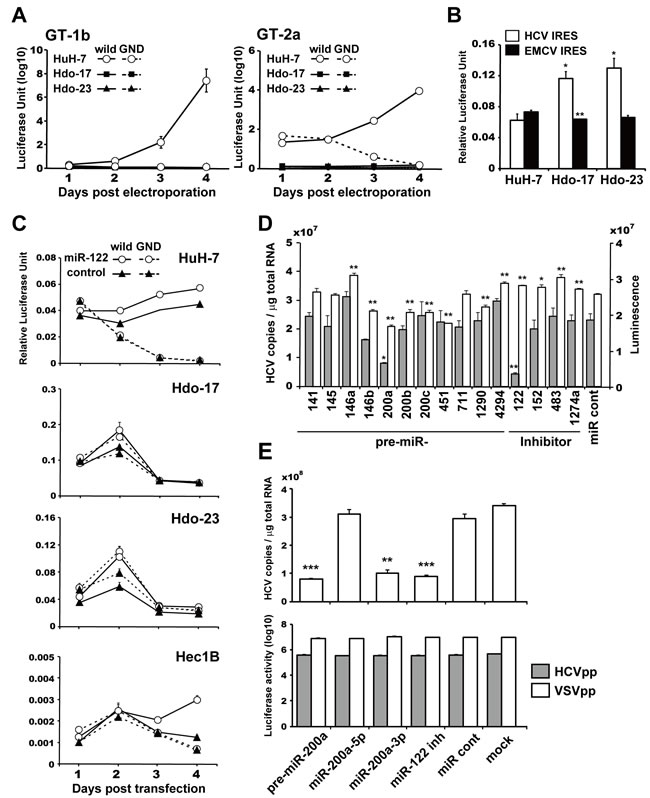 Susceptibility of Hdo cells to HCV RNA replication and involvement of miR-200a in replication.