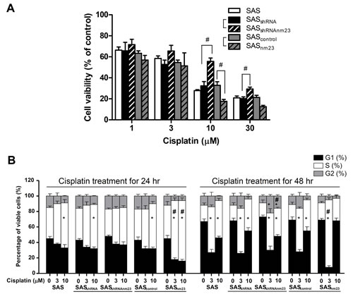 Knockdown of NM23-H1 attenuated the susceptibility of SAS cells to cisplatin and delayed cisplatin-induced S-phase cell accumulation.