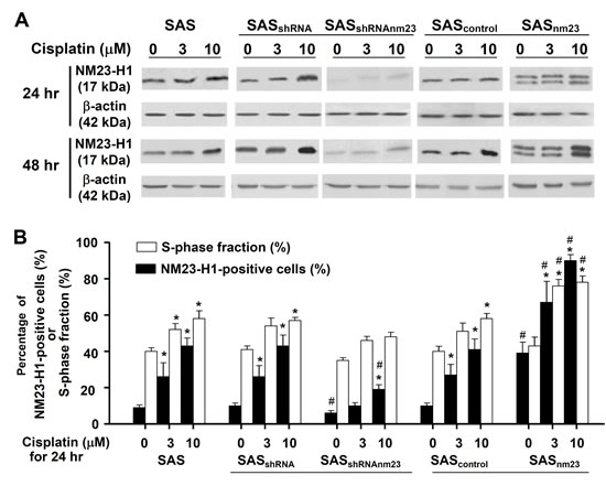 NM23-H1 expression of SAS cells was upregulated upon cisplatin treatment.