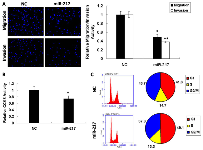 miR-217 modulates metastatic traits in Hep2 cells.