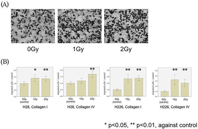 MPM cell migration following photon irradiation.