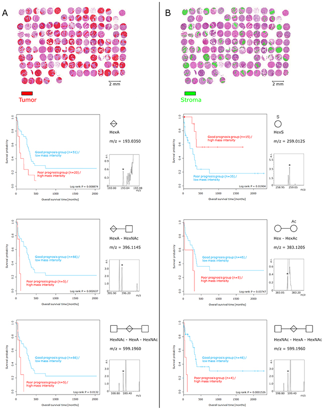 Survival analysis of glycan fragments.
