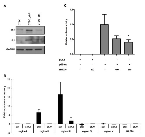 HMGA1 negatively regulates p53 expression at the transcriptional level.