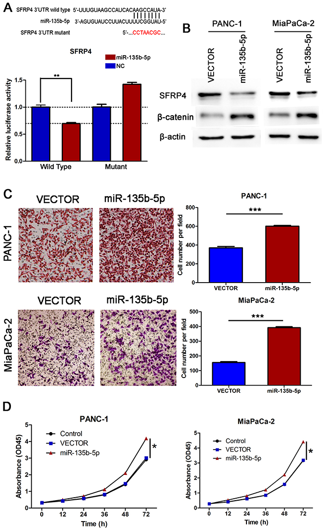 SFRP4 was a direct downstream target of miR-135b-5p. Overexpression of miR-135b-5p promoted migration and proliferation in vitro.