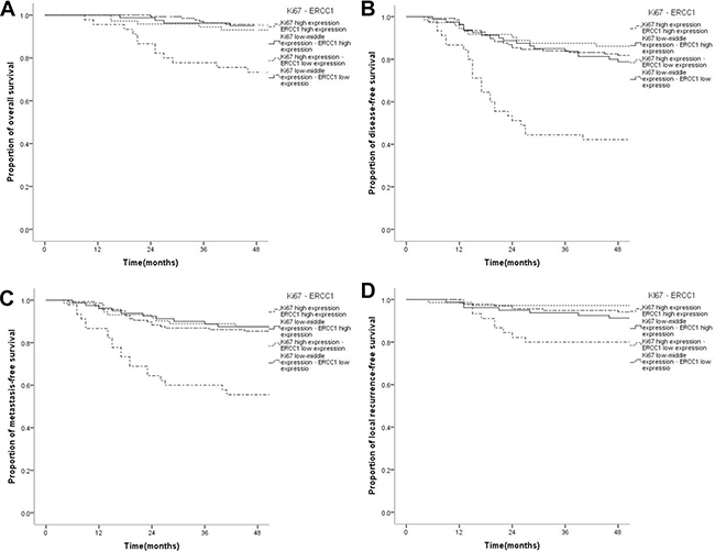 Kaplan-Meier survival curves of patients with nasopharyngeal carcinoma displaying different combinations of Ki67 and ERCC1 expressions.