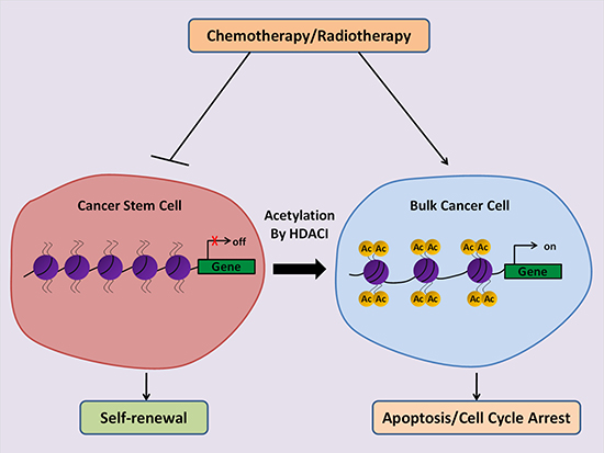 Schematic illustration of the anti-cancer potential of HDACIs to eliminate CSCs.