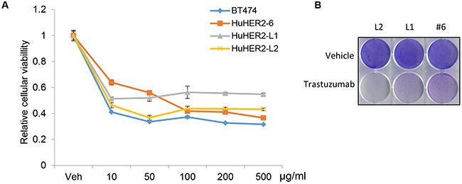 Cellular viability assay of HuHER2 cell lines exposed to trastuzumab.