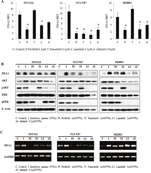 Involvement of the AKT pathway in PD-L1 expression regulation.