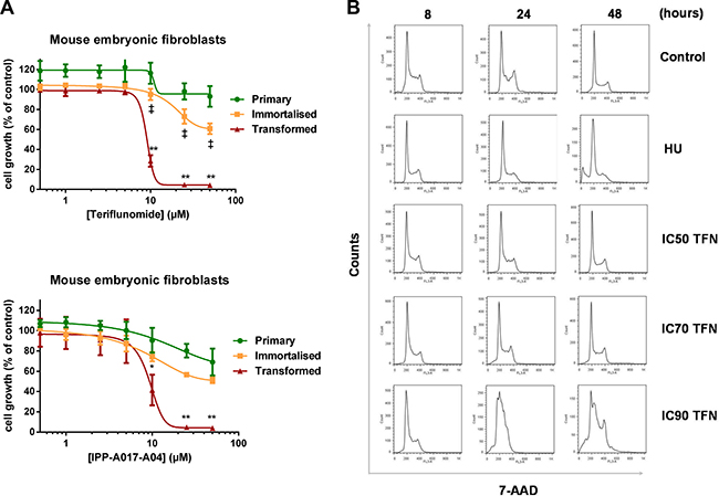 Selective pharmacological activity of teriflunomide in transformed mouse embryonic fibroblasts.