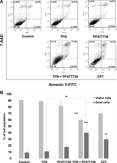 The combination of teriflunomide and PF477736 is cytotoxic in transformed mouse embryonic fibroblasts.