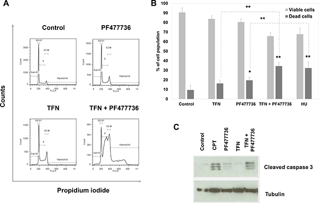 The combination of teriflunomide and PF477736 is cytotoxic in SUM159 triple negative breast cancer cell line.