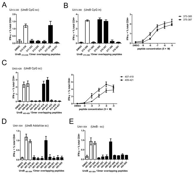 Identification of 13mer epitopes within dominant 18mer epitopes.