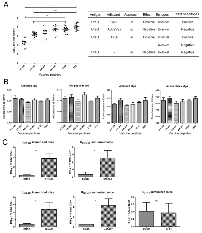 Effects of identified immunodominant epitopes in protection against H. pylori infection.
