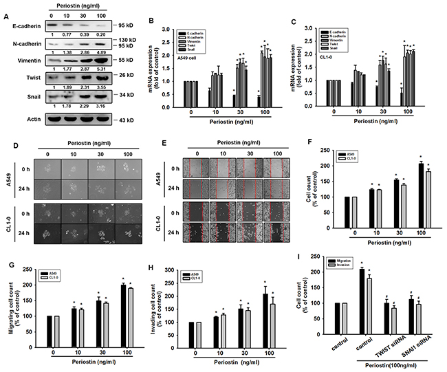 Periostin induces EMT in lung cancer cells.