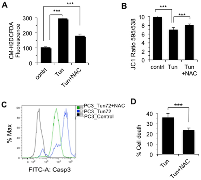 Tunicamycin-induced cell death of PC-3 cells was ROS-dependent.
