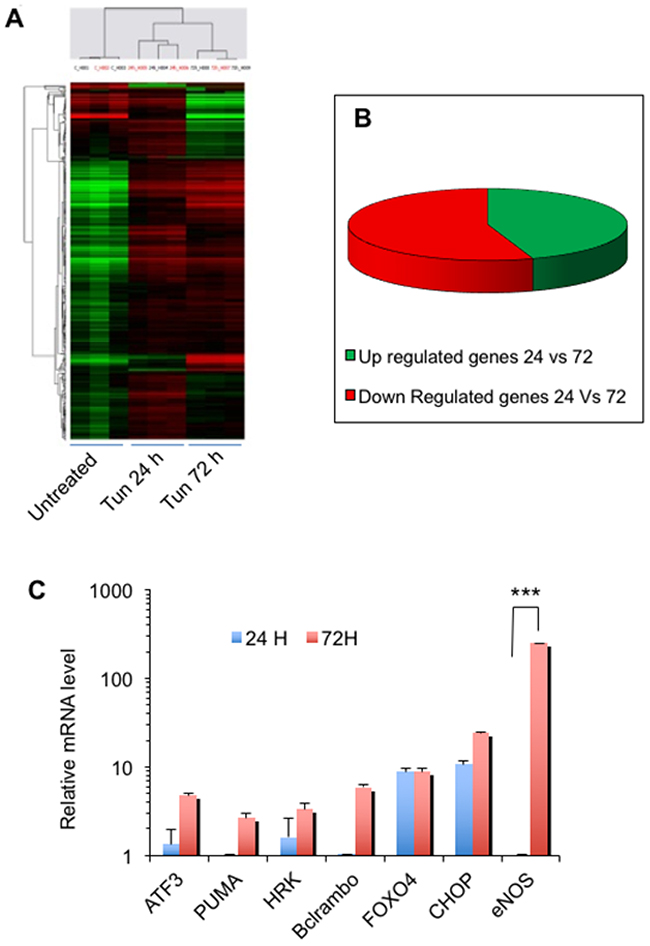 Genome-wide expression analysis identifies important candidate genes for cell death.