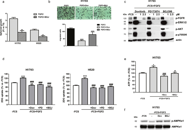 Effects of FGFR1 inhibition under FGF2 stimulation in serum-deprived H1703 and H520 cells.