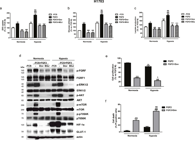 Effects of FGFR1 inhibition under FGF2 stimulation in serum-deprived H1703 cells in normoxic and hypoxic conditions.