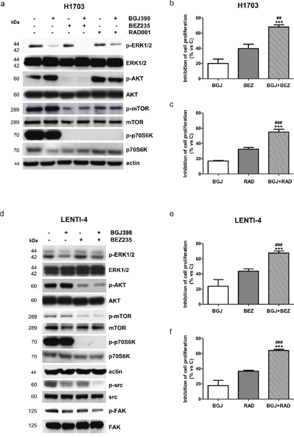 Effects of the combination of NVP-BGJ398 with AKT/mTOR inhibitors on H1703 and LENTI-4 cells.