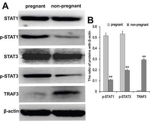 Transcription factor analysis in endometrial tissues.