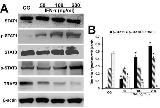 Effect of IFN-τ on transcription factor expression in EECs.