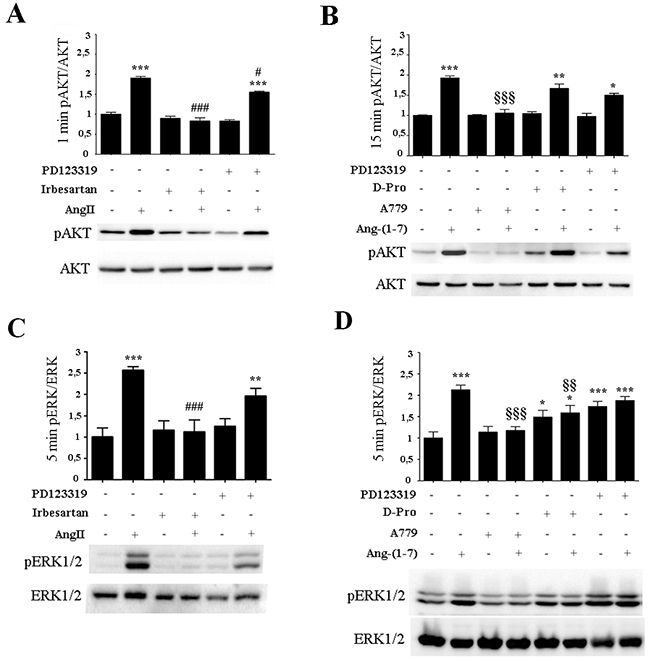 AngII induces ERK1/2 and AKT activation through AT1 receptor while Ang-(1-7) acts through the Mas receptor.